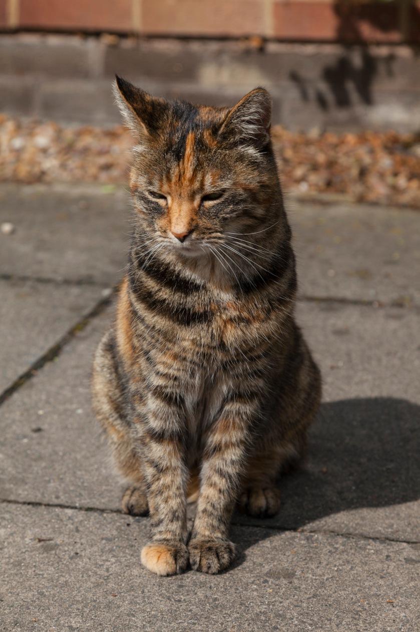 norwich-cat